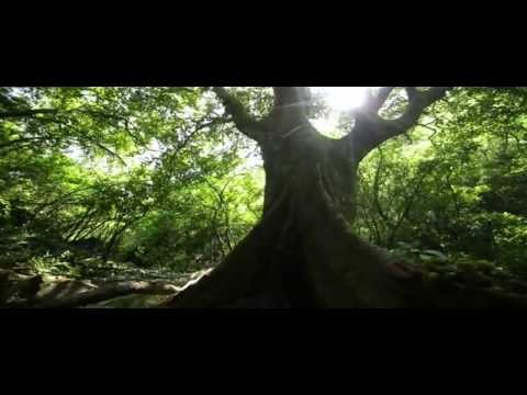 Margalla Hills National Park - Promo | HD PAKISTAN