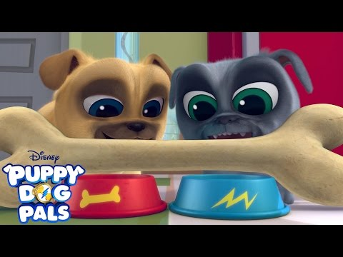 Theme Song | Puppy Dog Pals | Disney Junior