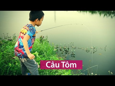 CÂU TÔM | SHRIMP FISHING