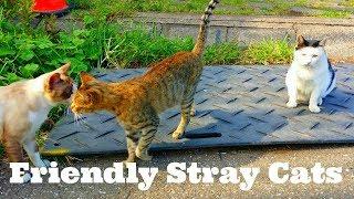 11 17 17 ‥ Friendly Stray Cats 🐱 As usual morning walk @ Tokyo Japan thumbnail