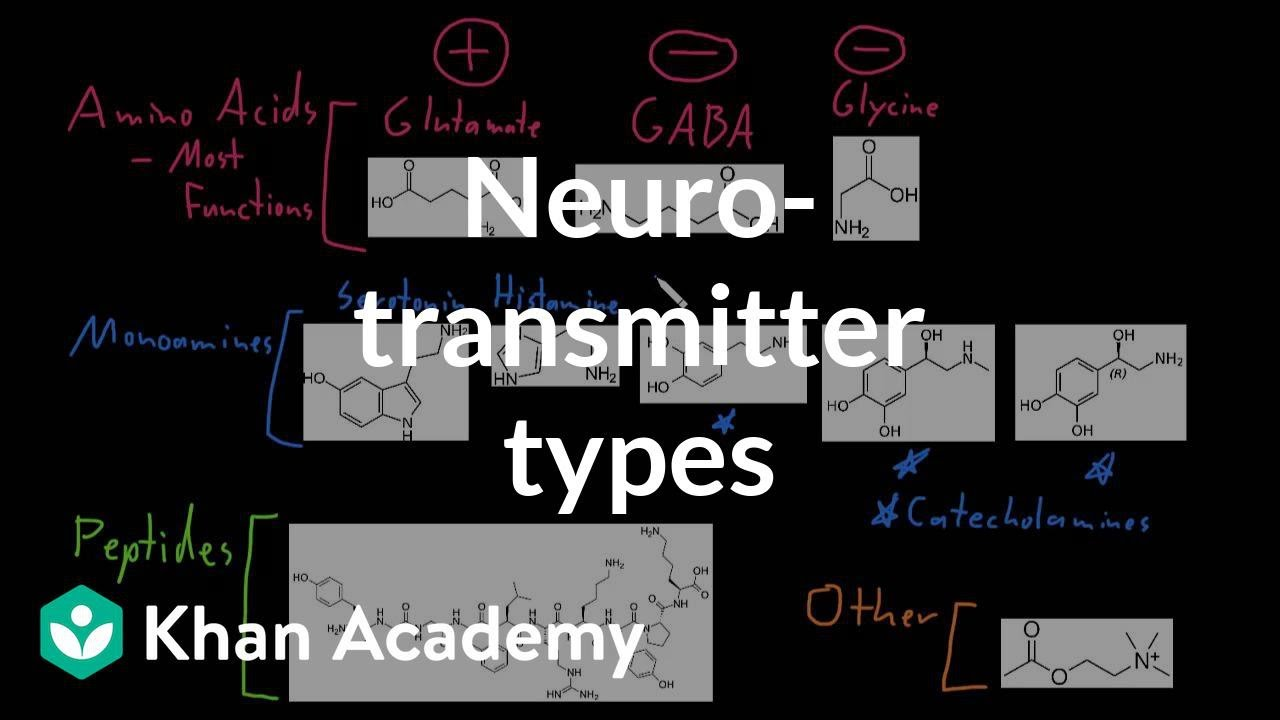 Types of neurotransmitters (video) | Khan Academy