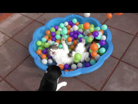 These Cats absolutely love Playing in the Ball Pit | 4K Ultra Hd | Original
