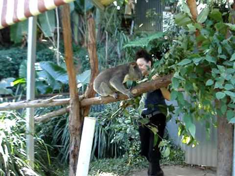 Cairns 2009 - Kuranda Koala Gardens