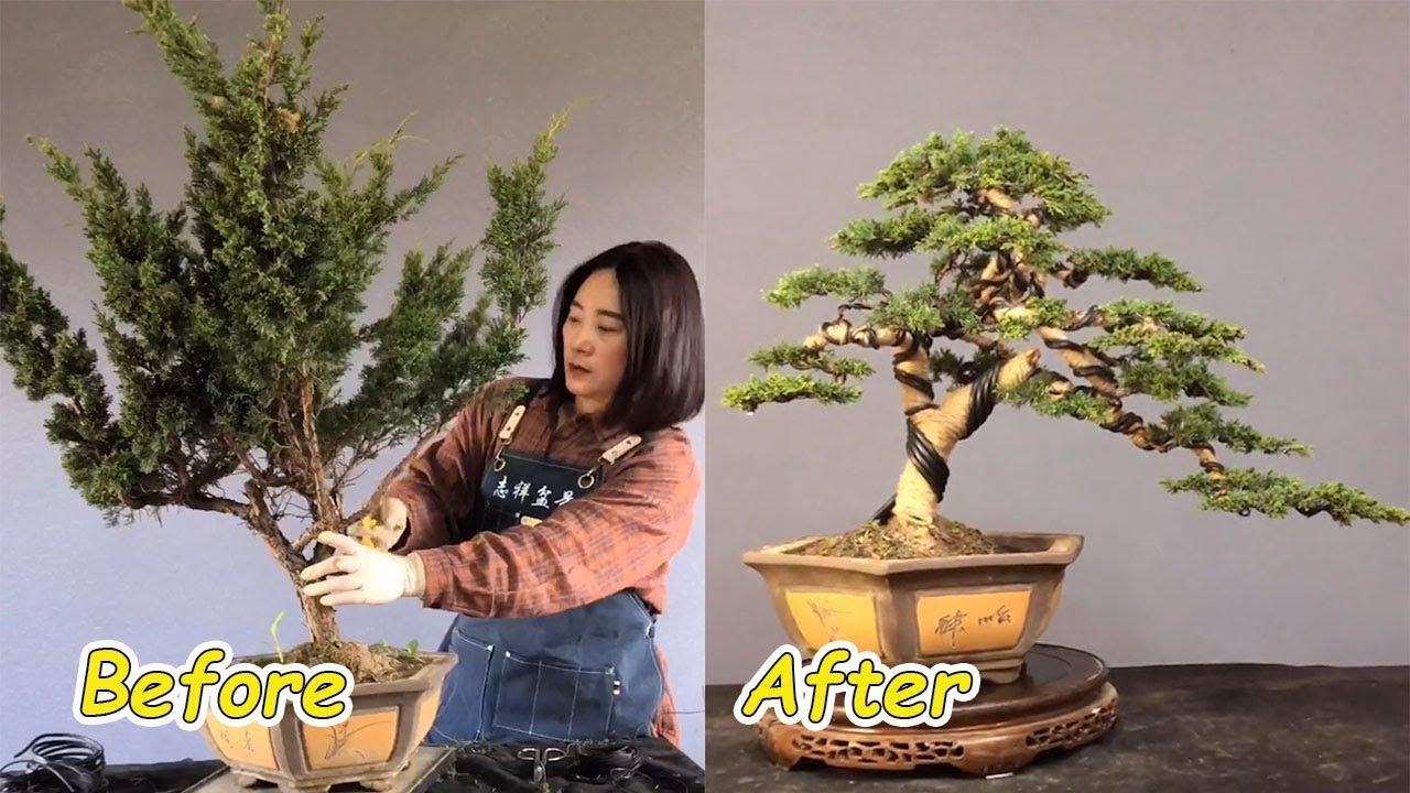 Download How to bend a bonsai - great bonsai bending skills #49