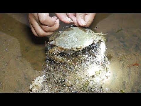 小章赶海发现沙滩上的烂网,里面缠住了很多海鲜。一个比一个大! 还捡了好多的贝壳送给粉丝!【赶海小章】