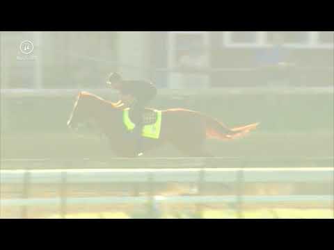 Justify Gallop 5.25.18