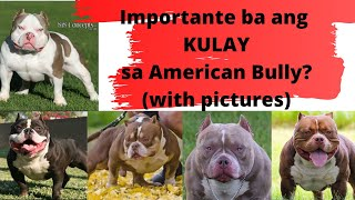 Importante ba ang COLOR sa American Bullies? w/SAMPLE PICTURES