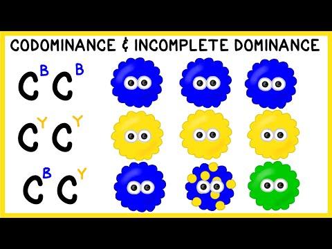 Codominance and Incomplete Dominance: Non-Mendelian Genetics