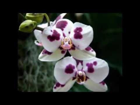 Орхидеи - множество видов