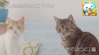 【ほしの島のにゃんこ】TVCM 「そう、わたしたちのように」篇