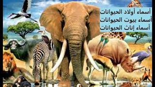 تحميل اصوات حيوانات الغابة mp3