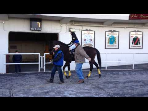 Mister Woolman - Riders up Aqueduct Race Track 02-17-2014