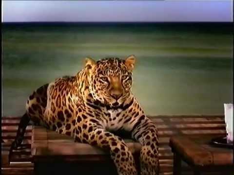 Schweppes Werbung mit Leopard Clive 2002