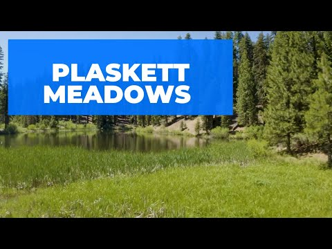 Plaskett Meadows Campground - Fishing, Hiking, Exploring