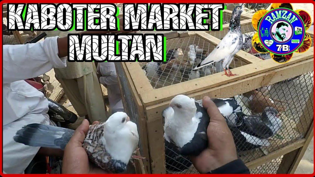 KABOTAR PEGEAN MARKET MULTAN PAKISTAN FRIDAY MARKET 18/01