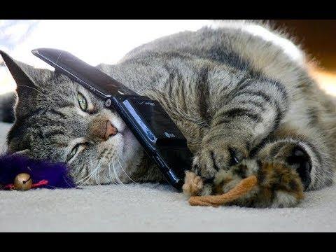 Cat Answers Phone '20th century'