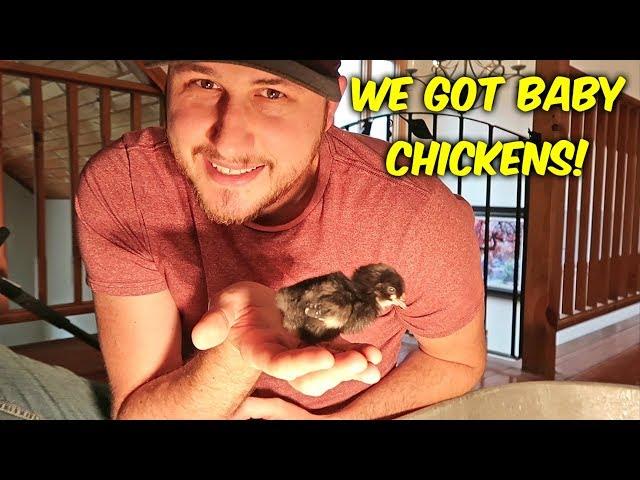 We Got Baby Chickens!
