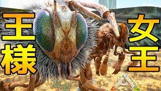 女王蜂の巣30個を守るキングダイオウバチ!!! チャンネル登録、感謝し...