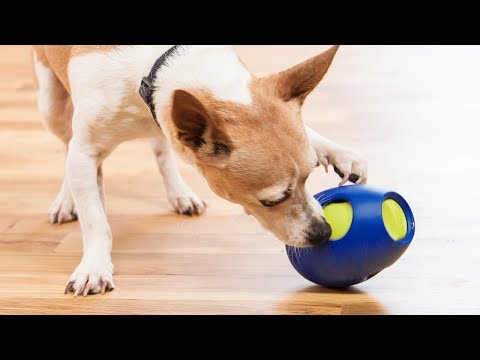 Can Fido beat the buzzer?