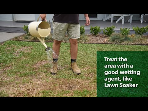 Dry, Patchy Lawn – What Can You Do About It?