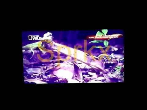 Sprkx IPTV Video Sample - Nat Geo Wild
