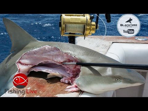 Fishing Live - Shark Fishing in Florida ft. BlacktipH. Kanal