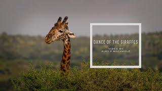 Dance of the Giraffes 2020 by Alex F Buchholz