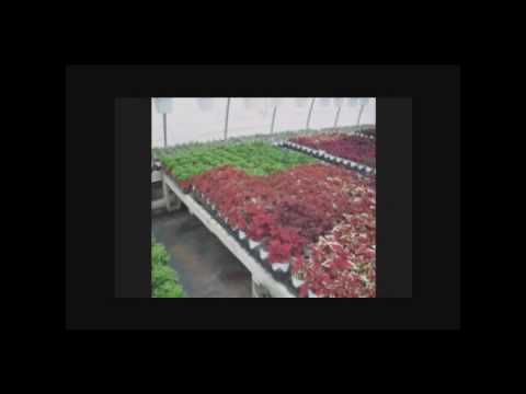 GARDEN CENTER BUFFALO NEW YORK NY,,GARDEN, CENTER, ...