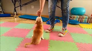 Piesocinek Rehabilitacja zwierząt TORUŃ, bieżnia wodna dla psów i kotów.