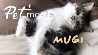 ペットムービー Mugi ver2 Petmovie PV