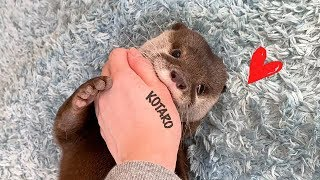 Kotaro the Otter How to Put a Kid to Bed