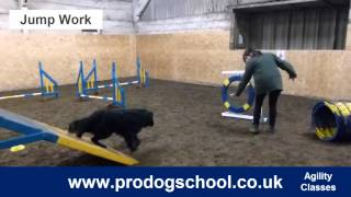 Dog Agility Classes - Pro Dog School - West Sussex, Uk