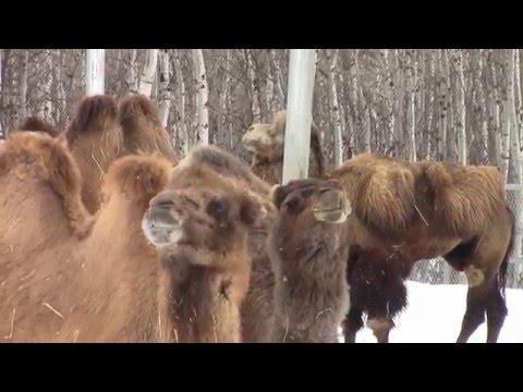 Assiniboine Park Zoo Extended Video