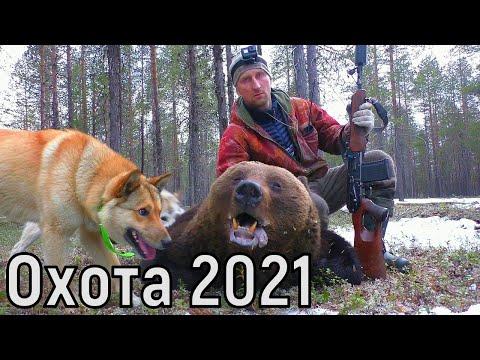 ОХОТА НА МЕДВЕДЯ.КРУПНЫЙ ЗВЕРЬ.Зверовая охота с лайками 2021г.