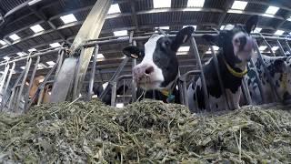 Journée à la ferme  - Traite -  ROTO -  Alimentation
