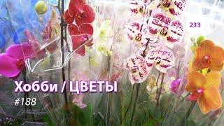 233#188 / Хобби Цветы / 02.2020 - МОСКВА. ОБЗОР