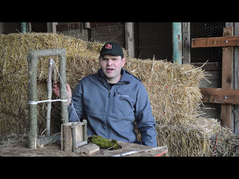 Spanish Windlass Snare Survival Trap in Action. Catching, Cooking, Eating Rats