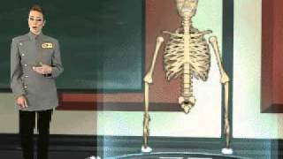 The Skeletal System (Brief Overview for Primary/Secondary Grade Students)
