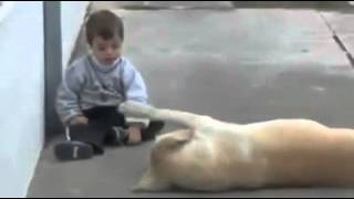 The Gift Of Life (Dog & Boy)