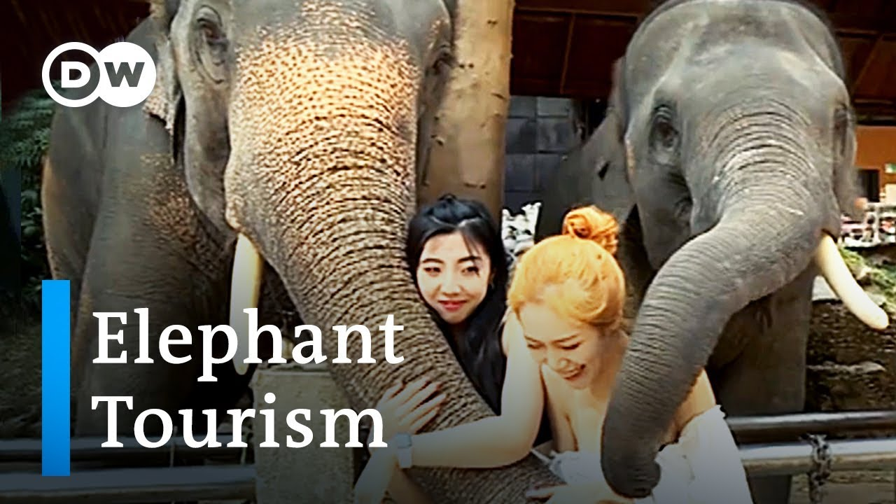 The dark side of Thailand's elephant tourism | DW Stories