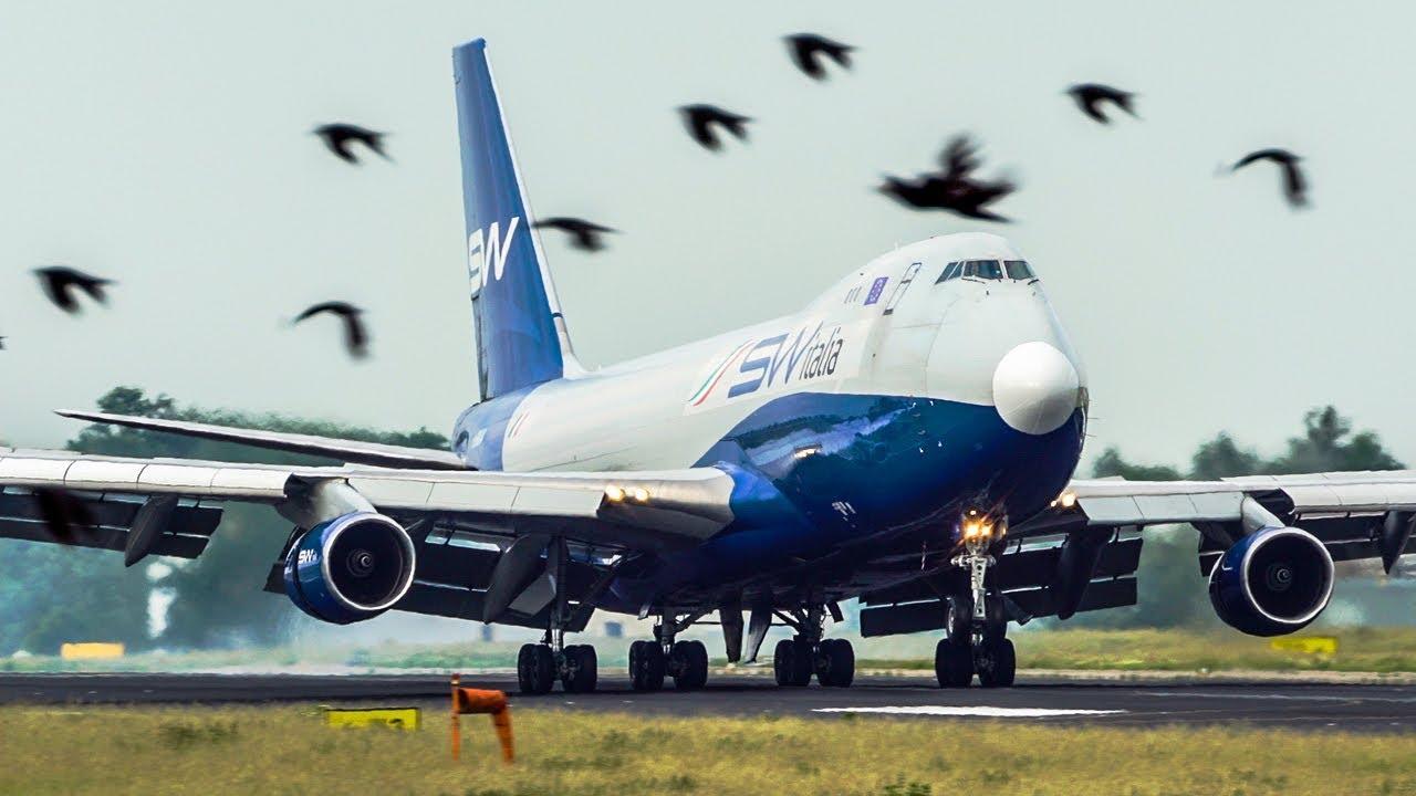 צלם המטוסים בתיעוד חדש: המראות ונחיתות בשדות תעופה בעולם כשמסביב מאות ציפורים