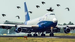 BOEING 747 LANDING with LOTS OF BIRDS passing by (4K)