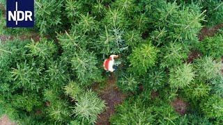Oh Tannenbaum: Das Geschäft mit Weihnachten | NDR Doku | 45 Min thumbnail