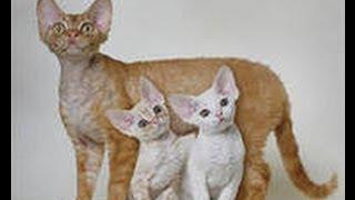 Кошка  перепутала котят с утятами!))) Интернациональная мать!