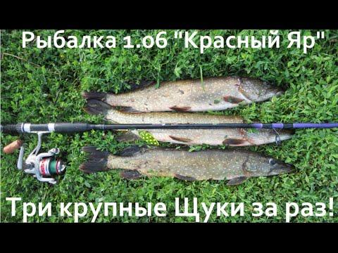 "Рыбалка 1.06 ""Красный Яр"" Три крупные Щуки за раз!"
