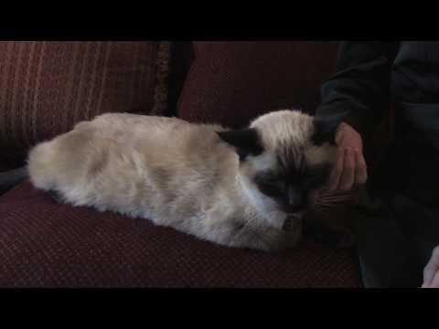 water bottle cat training