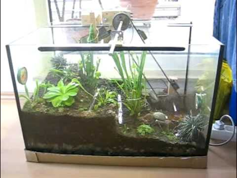 terrarium mit bewegung juni 09 youtube. Black Bedroom Furniture Sets. Home Design Ideas