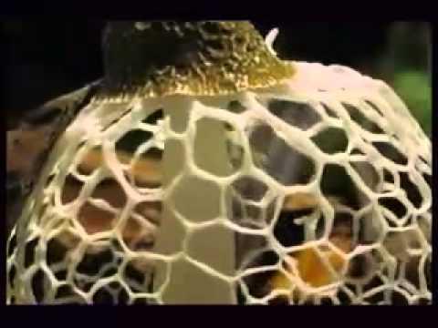 Как растут грибы