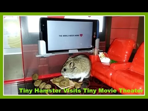 Tiny Hamster visits Tiny Movie Theater to #ShareSomeSoul