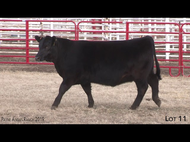 Payne Angus Ranch Lot 11